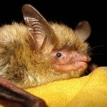 fayetteville north carolina bat removal