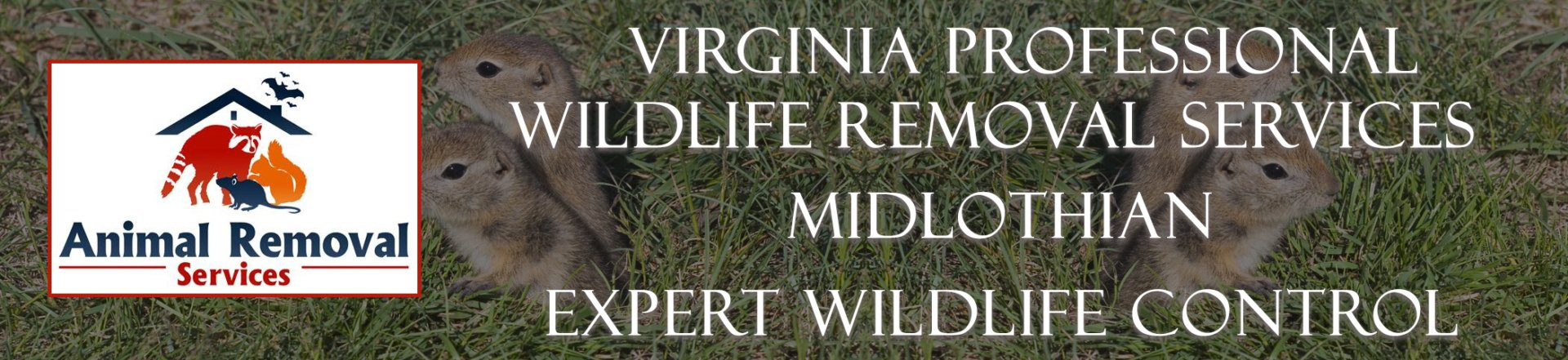 midlothian virginia bat removal
